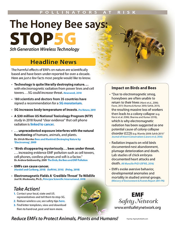 Pollinators at risk: Honey Bee Says STOP 5G, Smombie Gate | 5G | EMF